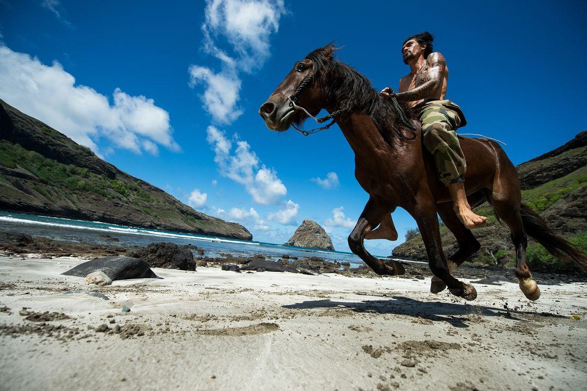 Training mit Pferden