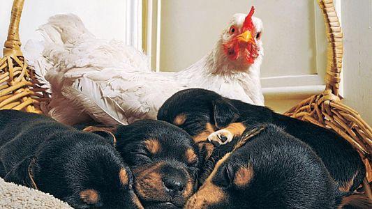 Galerie: Wahre Liebe: Tierische Zuneigung, die verwundert