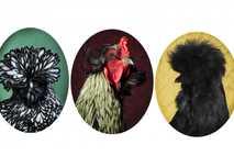 Hühnerarten