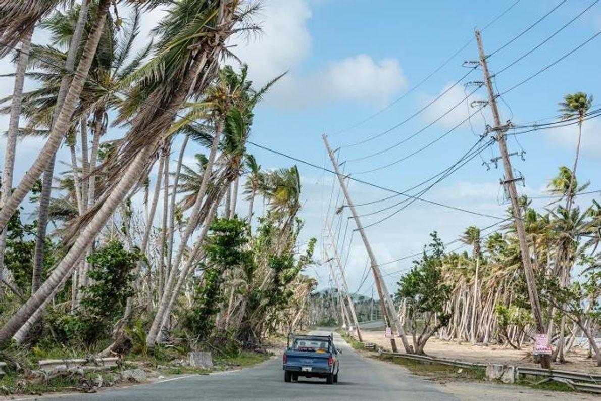 Nach dem Hurrikan Maria neigen sich viele Palmen und Strommasten gefährlich in Richtung Straße.