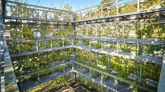 Galerie: Von lebenden Brücken und Balkonen aus Bäumen
