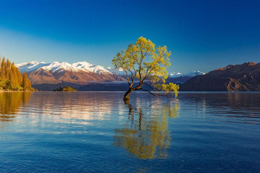 EINSAMER BAUM AM LAKE WANAKA, NEUSEELAND: Diese einsame Weide, die direkt aus den Tiefen des neuseeländischen …