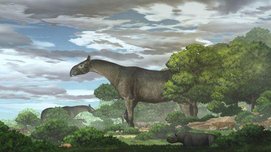 Vor etwa 26,5 Millionen Jahren wanderte das neuentdeckte Riesennashorn durch das Hochland von Tibet.