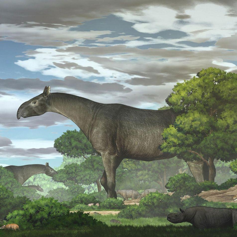 Größer als eine Giraffe: In China wurden die fossilen Überreste eines gigantischen Nashorns gefunden