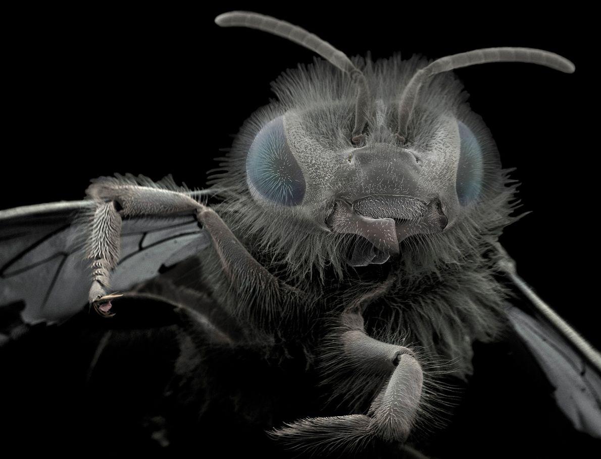 Galerie 1: Makroaufnahmen zeigen Parasiten von ihrer schönsten Seite