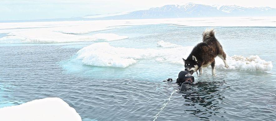 Paul Rose wird von seinem Bärenschutzhund nach einem Tauchgang stürmisch begrüßt.