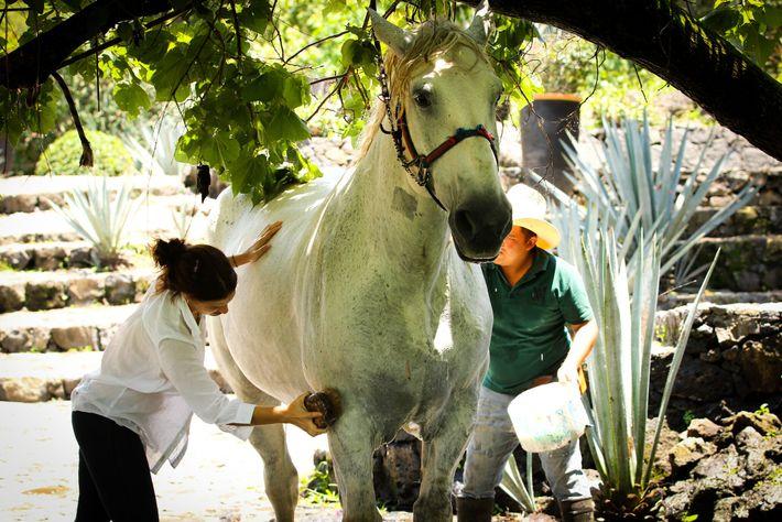 Maison Amatlán: Besucher können sich intensiv mit Tieren befassen