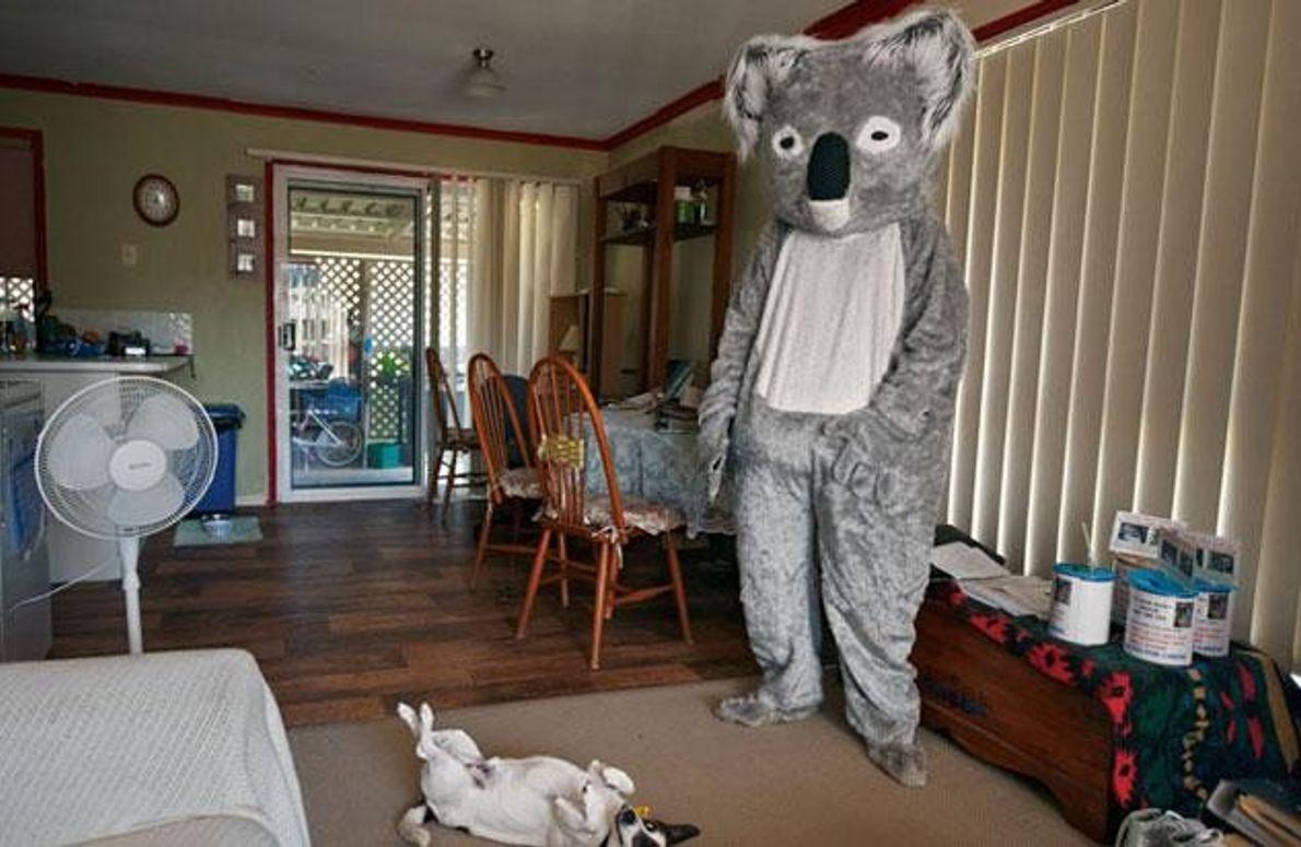 Information im Koalaanzug