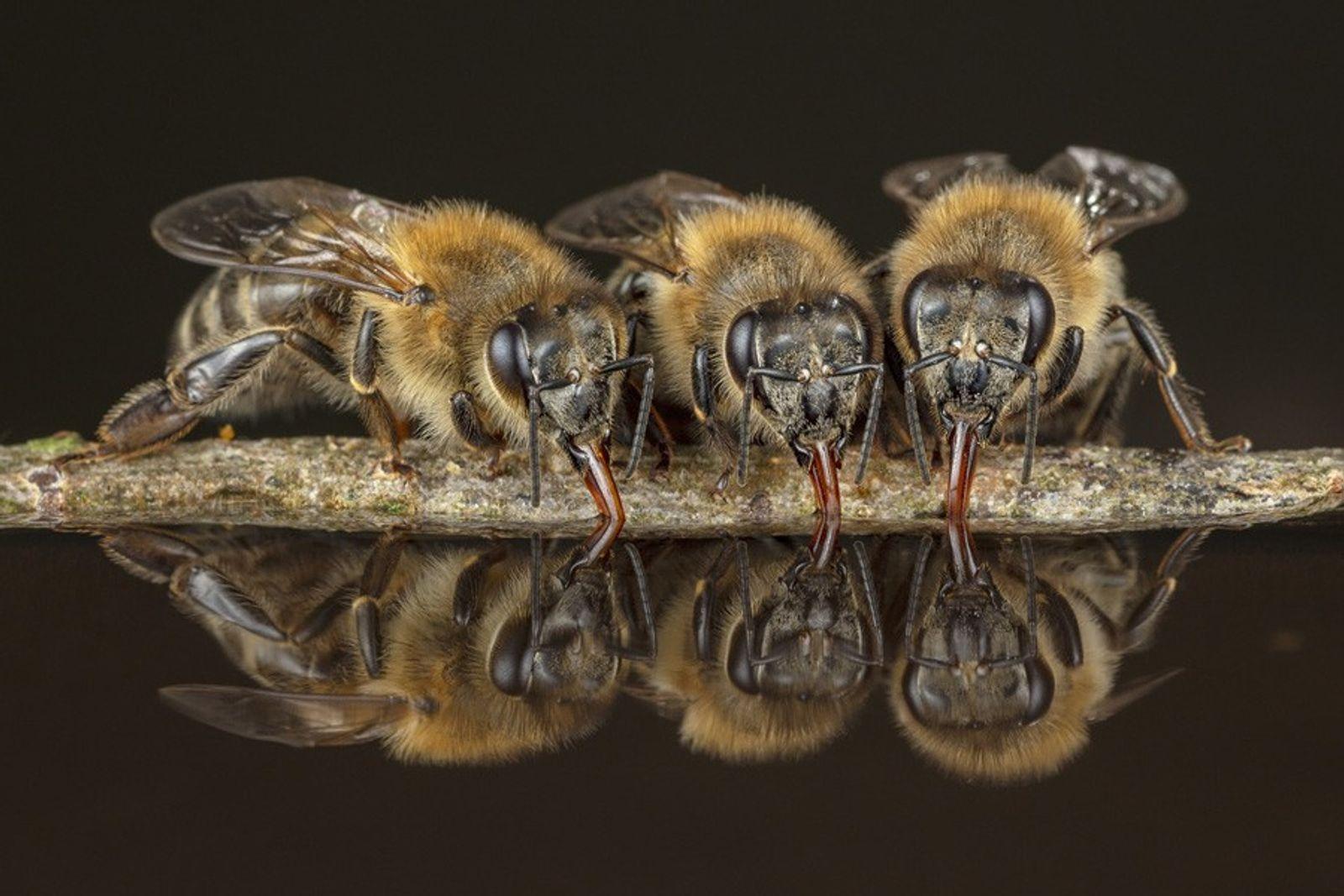 Faszination Bienen