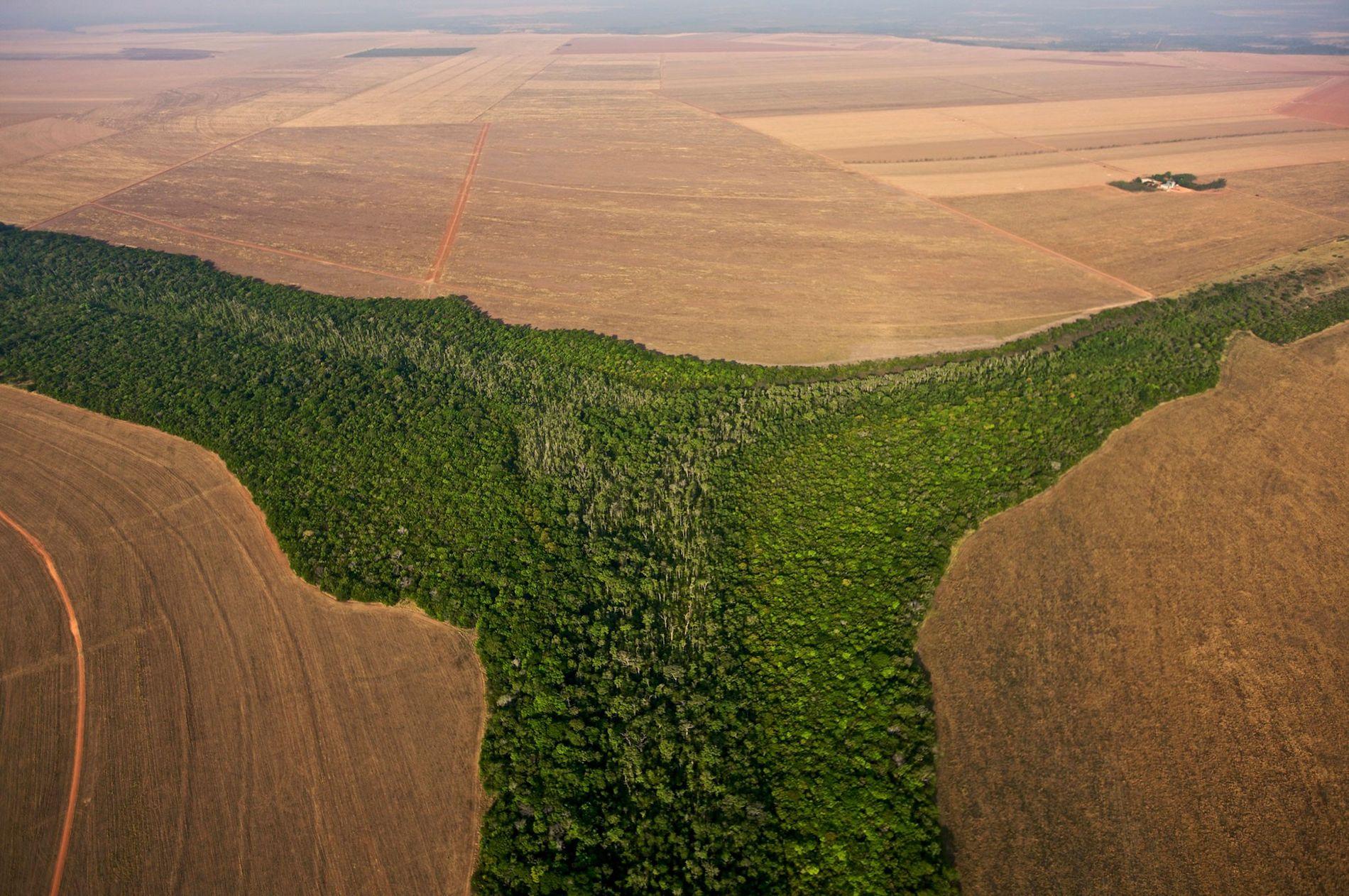 Brasilien ist einem Bericht des Weltklimarats zufolge eines der Länder, in denen die Abholzung der Wälder eingeschränkt werden muss, um die globale Erwärmung zu verlangsamen.