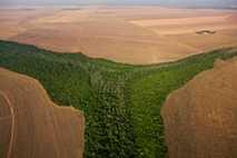 Waldabholzung in Brasilien