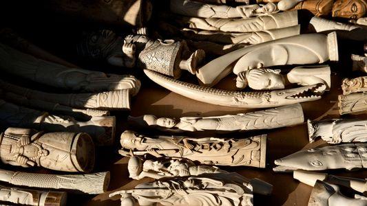 Expertenmeinungen: Rettet die Zerstörung von Elfenbein Elefanten?