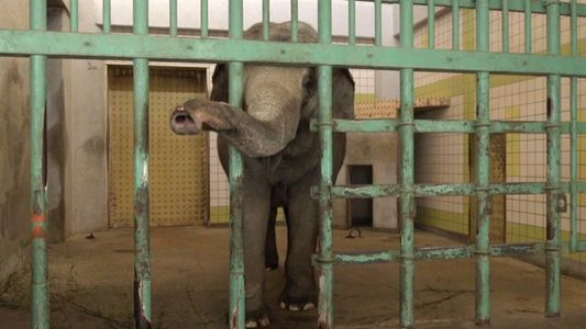 Die einsamsten Elefanten der Welt