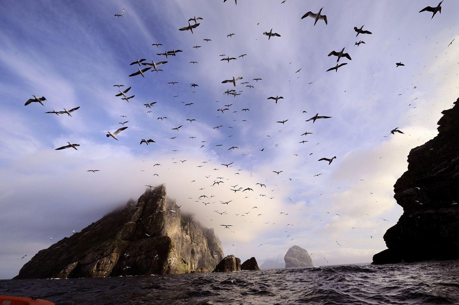 Diesen kurzen Sonnenmoment nutzen Tölpel zum Flugstart auf Boreray. Die unbewohnte Insel liegt gut sechs Kilometer ...