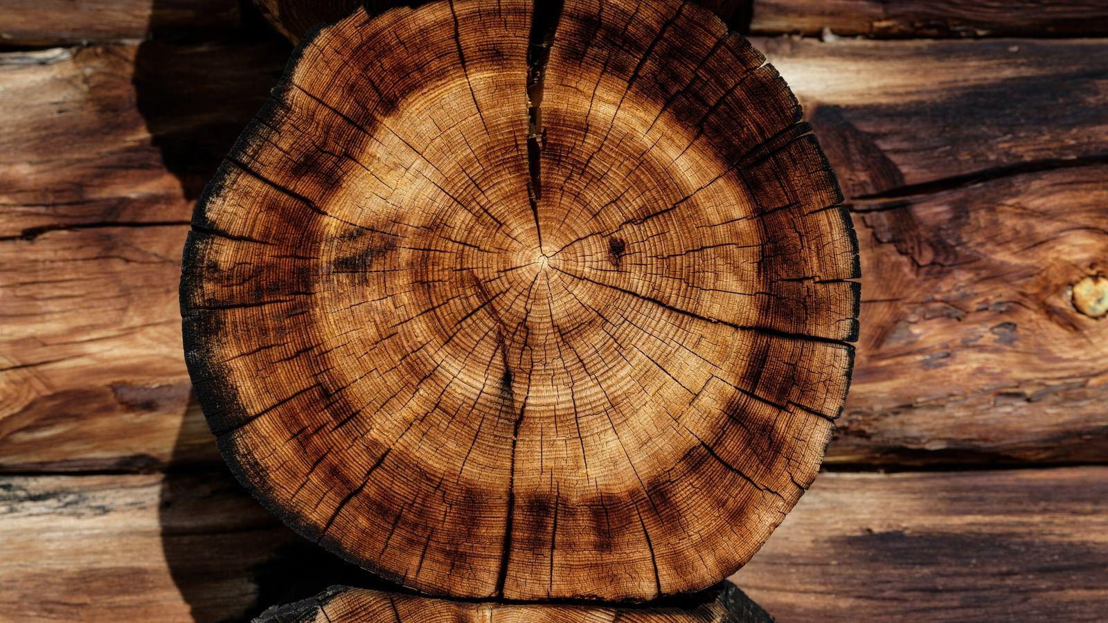 Wie ist es um die Nachhaltigkeit von aus Holz gebauten Häusern bestellt und worauf ist beim ...