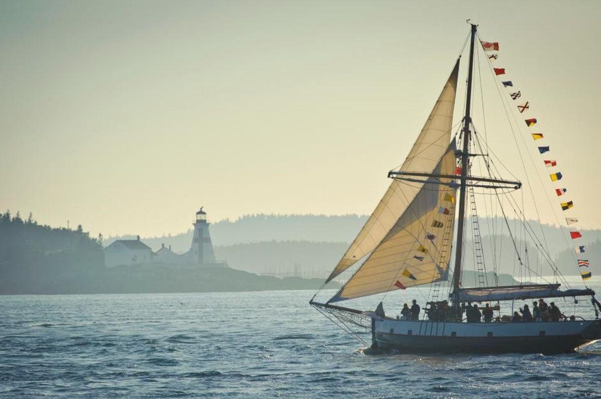 Besucher können auf der Jolly Breeze durch die Bucht fahren und einen Blick auf die Buckelwale ...