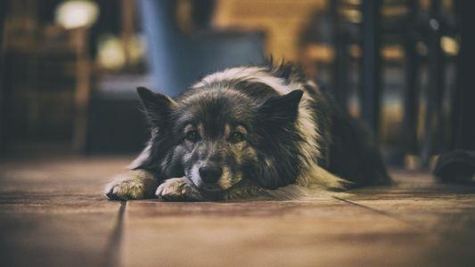 Wie nehmen Hunde Zeit wahr?