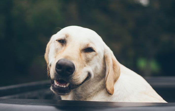 Glück Unterricht lächelnder Hund