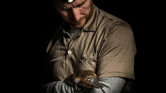 Der Schnabeltierforscher und Ökologe Josh Griffiths wiegt ein weibliches Schnabeltier, das er gerade gefangen hat.