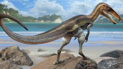 Raubsaurier mit Supersinn: Juravenator hatte Sensor-Schwanzschuppen