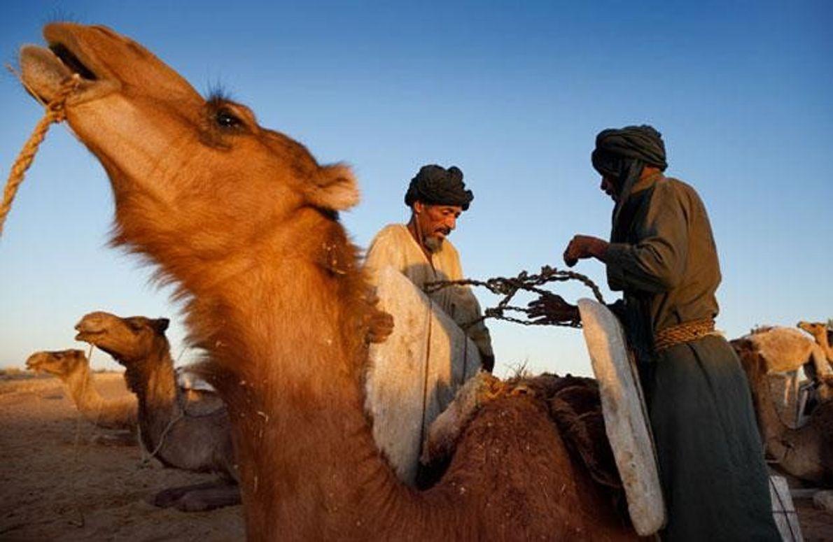 Kamelkarawanen, die früher die Handelsplätze der Sahara verbanden, werden heute durch Lkw ersetzt. Tuareg, die Salzplatten …