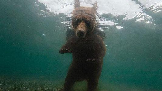 Kamtschatka: Ein Himmel für Lachse