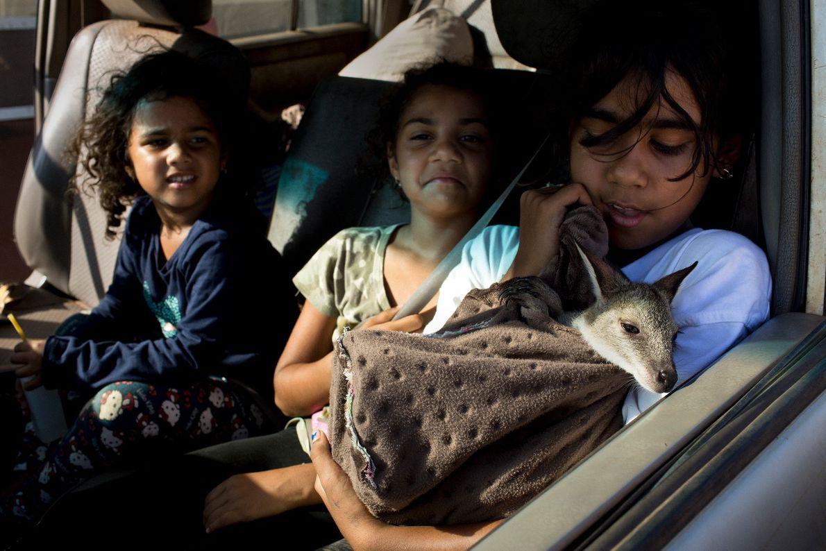 Ein Tiwi-Mädchen in einem Auto hält ein junges Wallaby im Arm.