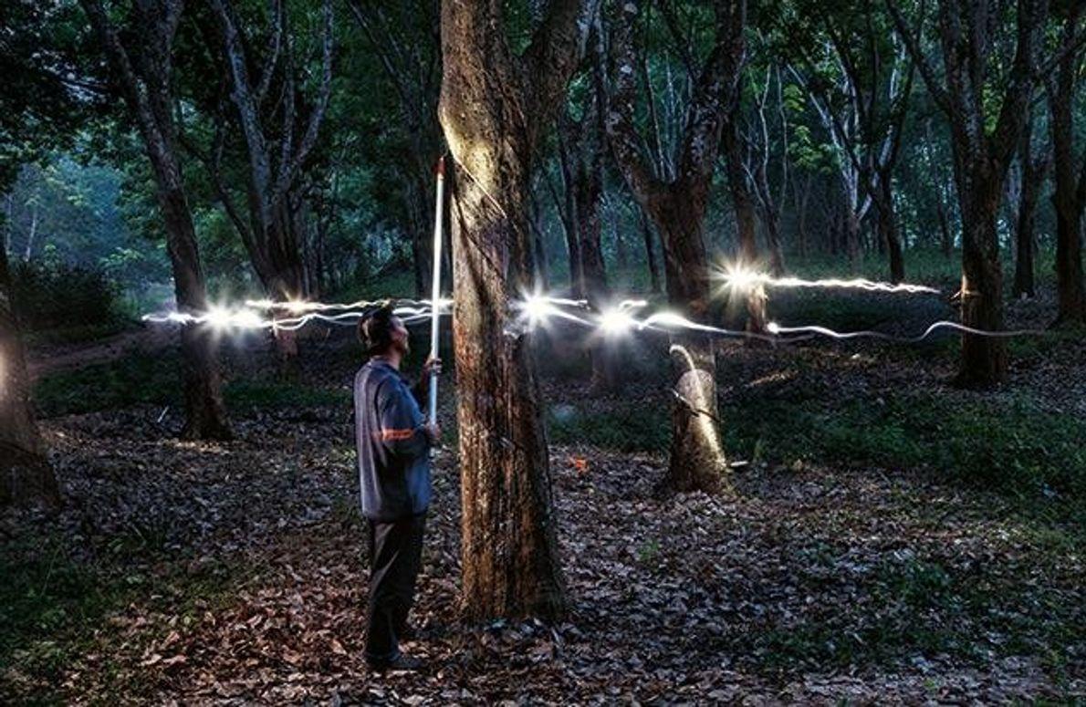 Wie Blitze wirken die Stirnlampen der Arbeiter aus Xishuangbanna in dieser Langzeitaufnahme. Die Männer ritzen nach …