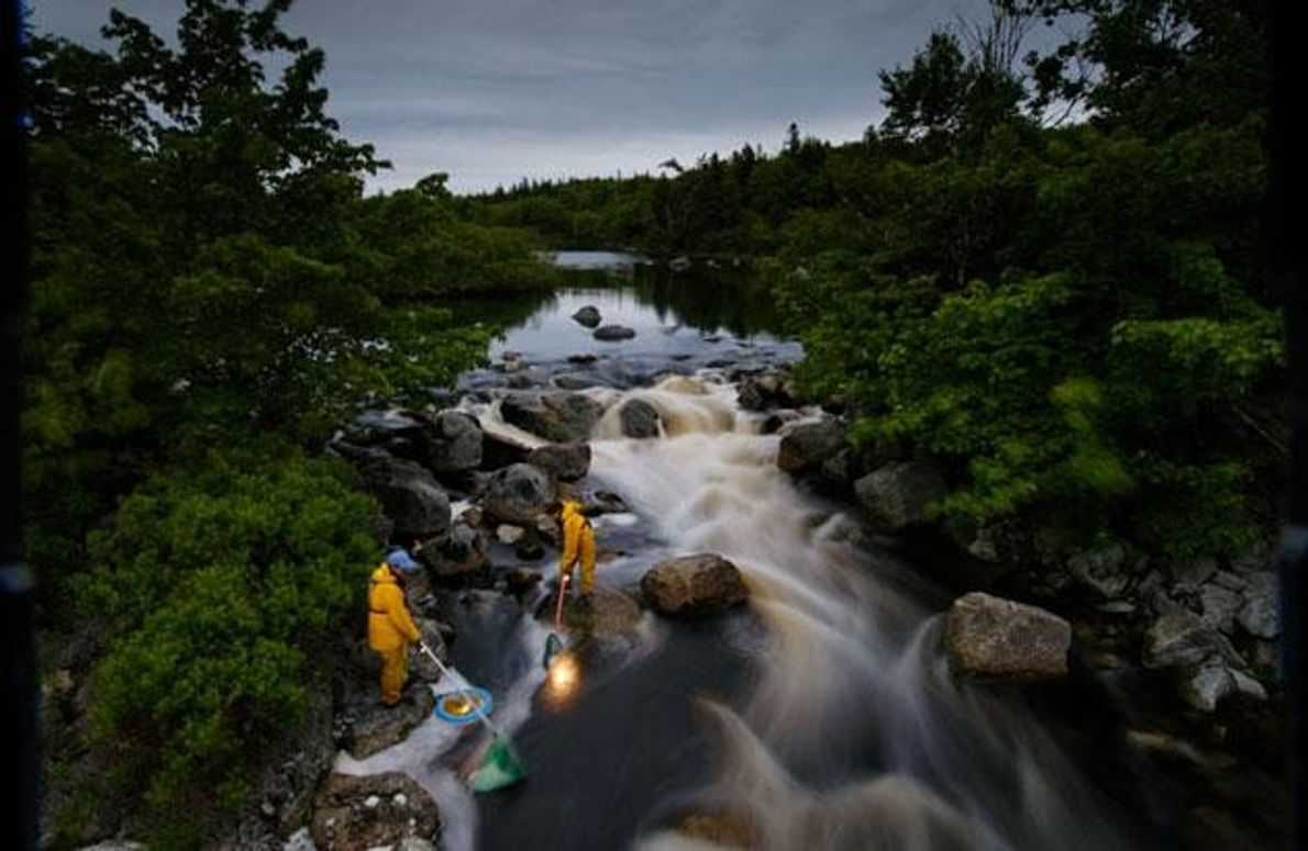 Am East River in Nova Scotia keschern Yvonne Carey (ganz links) und ihre Tochter Genna in …