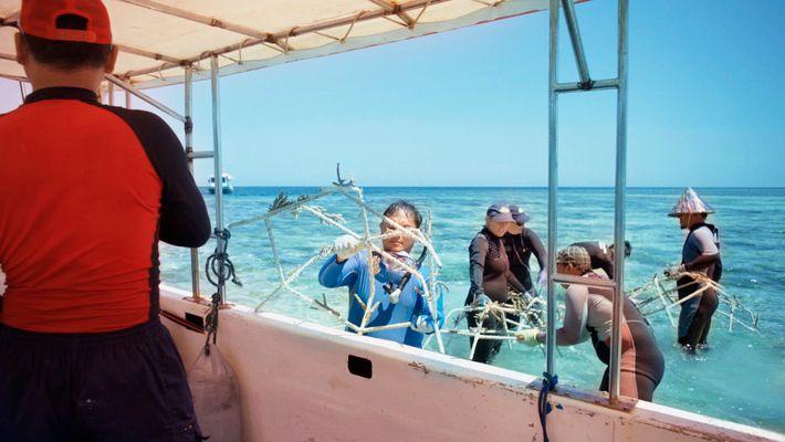 """Ein Team von Tauchern bereitet sich darauf vor, """"Riffsterne"""" am Meeresgrund zu befestigen, um das SHEBA® Hope ..."""