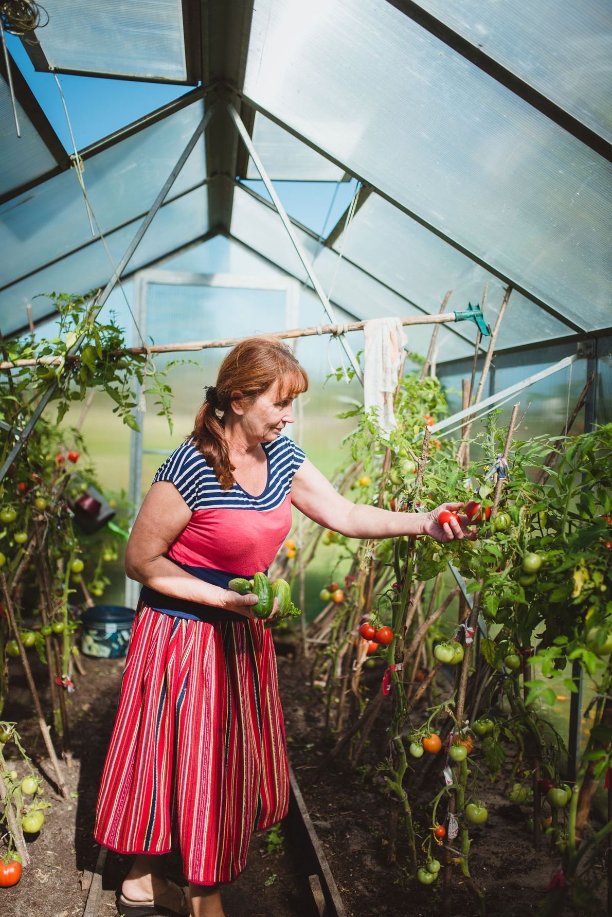 Õie Vesik bei der Tomatenernte in ihrem Gewächshaus. Traditionell kümmerten sich die Frauen um die Landwirtschaft, ...