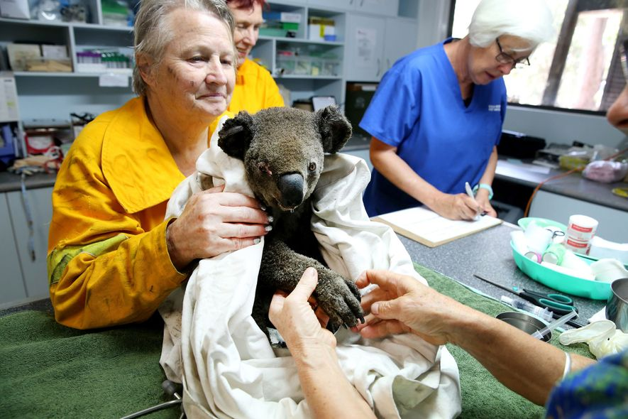 Koala Hospital