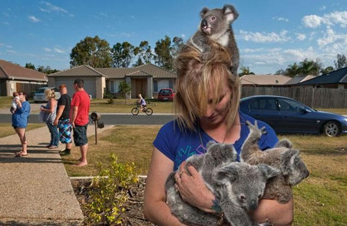 Koala-Mami Samantha Longman