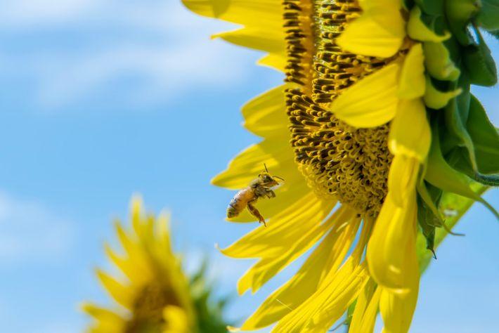 Biene Bienenkrankenhaus