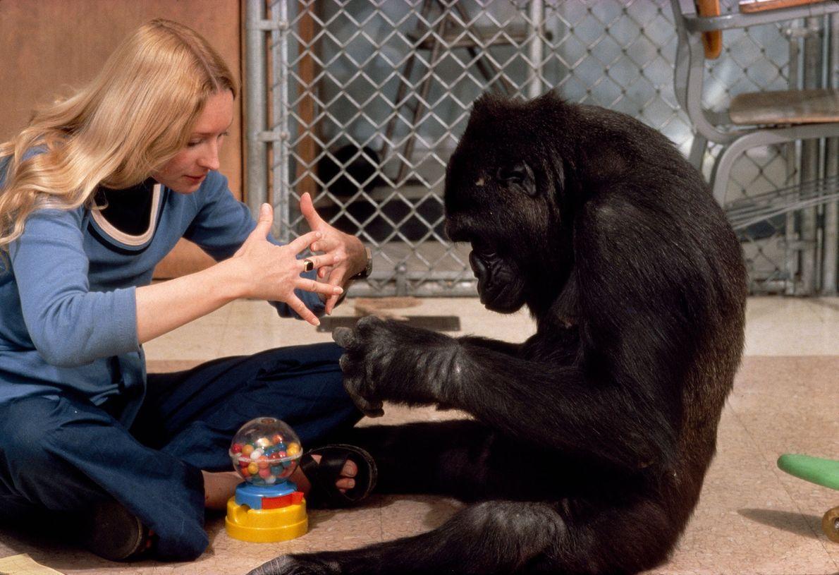 """Koko macht das Zeichen für """"Maschine""""."""
