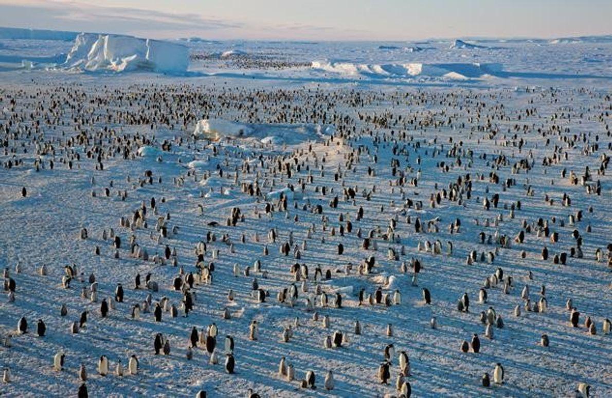 Kolonie auf dem Rossmeer