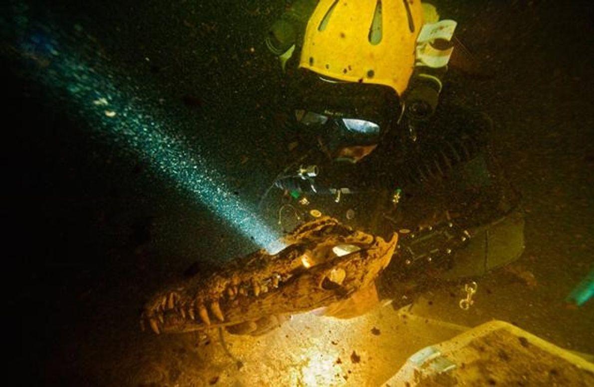 Der Höhlentaucher Brian Kakuk birgt den mehr als 3000 Jahre alten Schädel eines Krokodils aus dem …