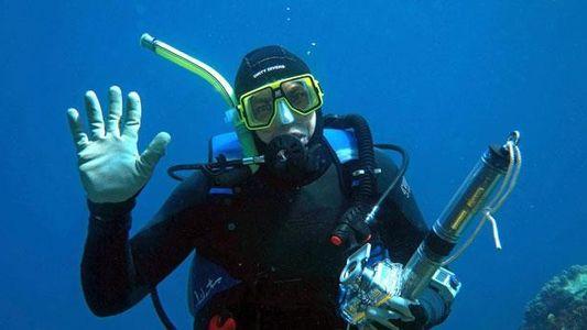 Welches ist das gefährlichste Meerestier für Schwimmer, Taucher oder Surfer?