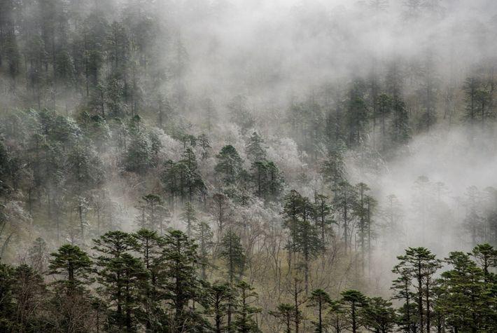 Viele große Prädatorenspezies sind aus den Wäldern Chinas verschwunden.