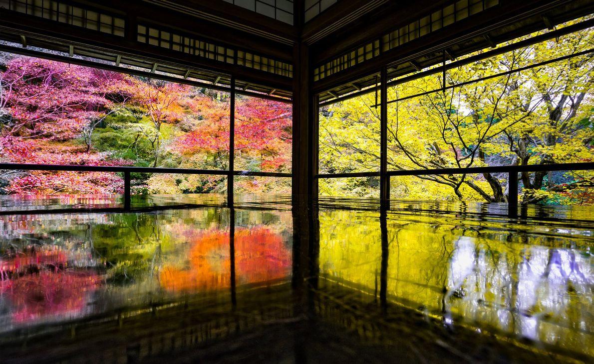 Ein Garten am Wasser zeigt sich in seinen leuchtendsten Herbstfarben. Tempel wie diese offene Pagode in ...