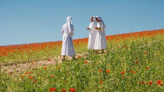 So wollen Einheimische Italiens Wildblumenpracht vor Touristen schützen