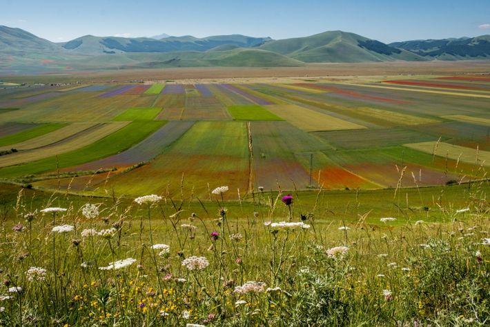 La Fiorita field