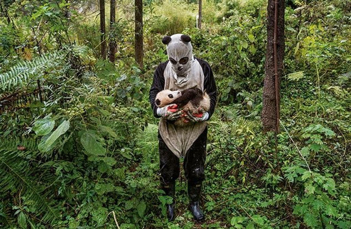 Lässt sich ein Panda von einem Kostüm an der Nase herumführen?