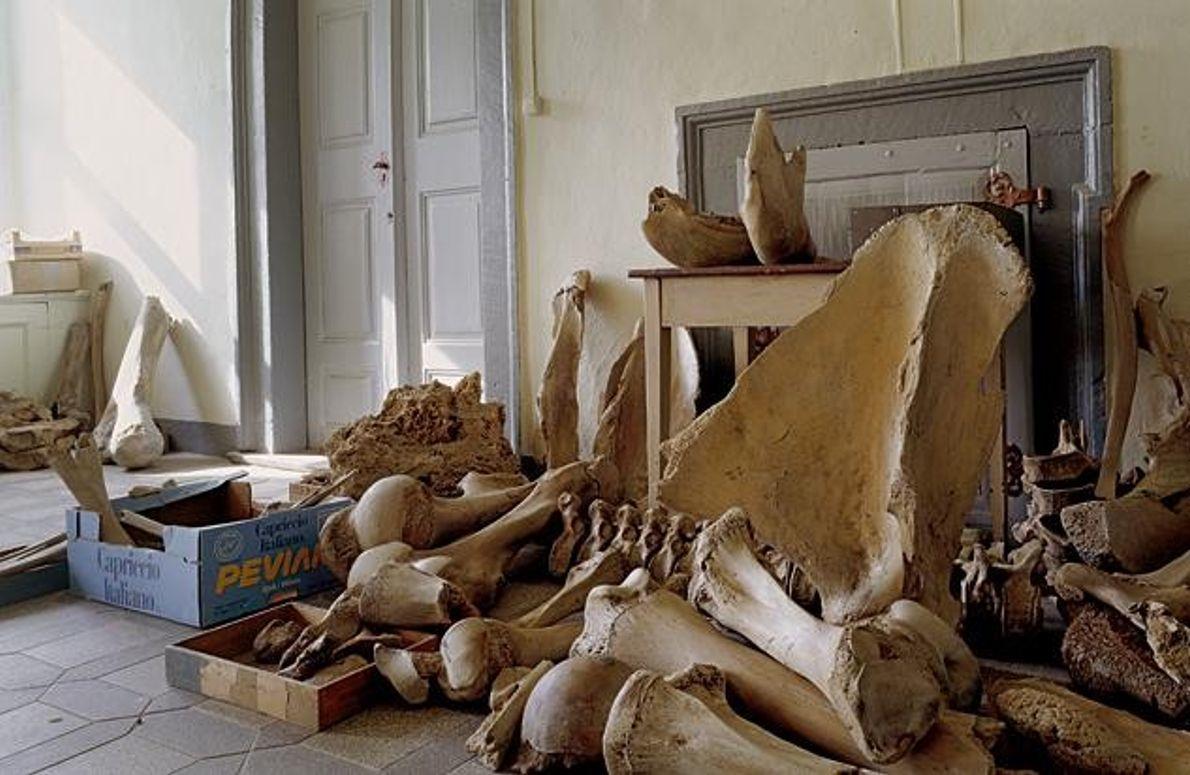 Lagerstätte für Skelette