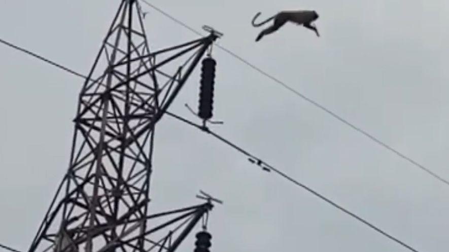 Spektakulärer Sprung eines Affen