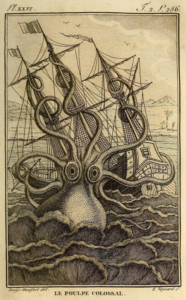 Die Zeichnung von Pierre Denys aus dem Jahr 1801 stellt einen gigantischen Oktopus dar, der, Berichten ...