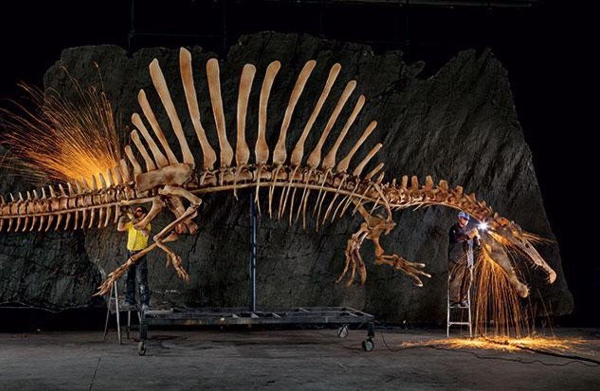 Lebensgroßes Modell des Spinosaurus-Skeletts