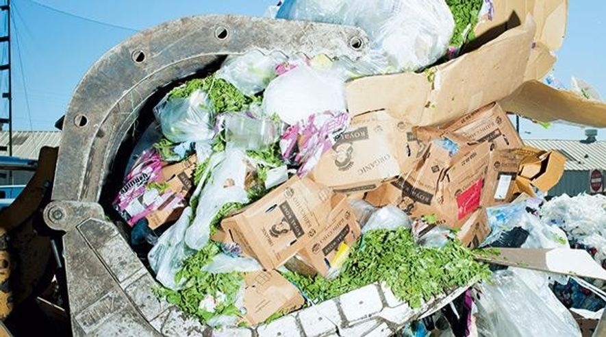 Lebensmittelverschwendung: So eine Schande!