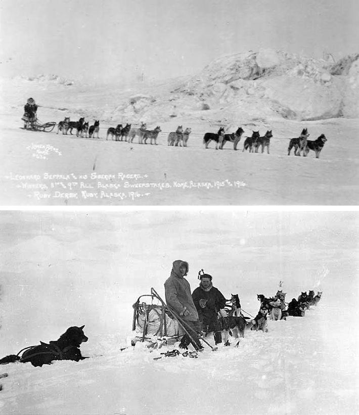 """Leonhard Seppala mit seinen """"Siberian Racers"""" 1916 (oben) und mit dem norwegischen Entdecker Roald Amundsen 1923. ..."""