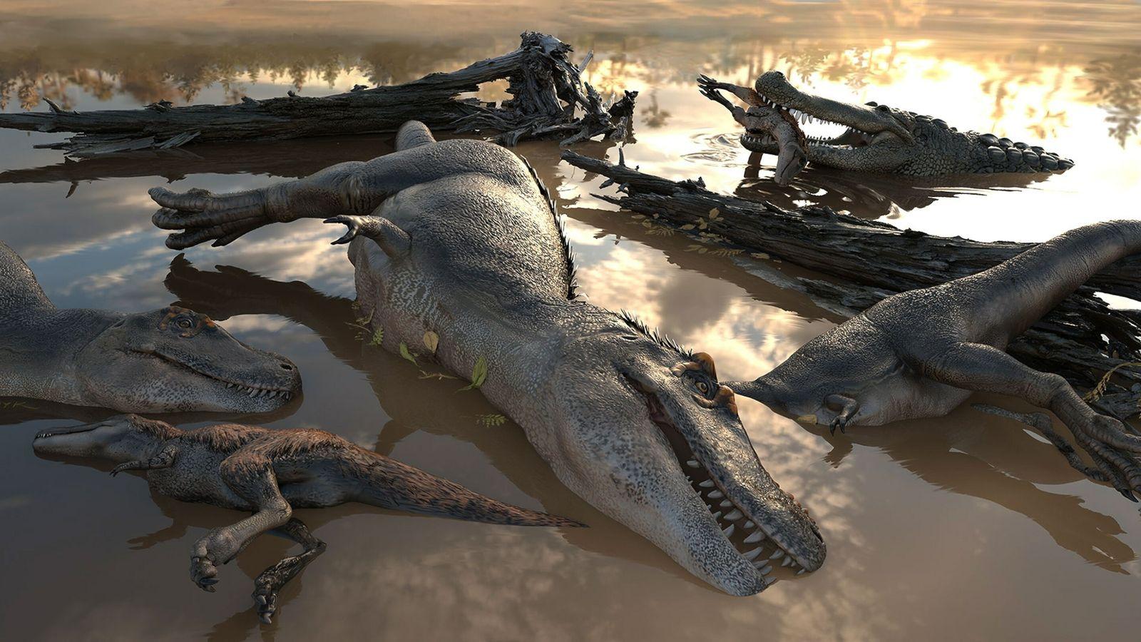 Ertrunkene Tyrannosaurier